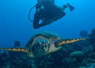Minister of Tourism, Hon. Ian Douglas - Diving with a Turtle in Dominica