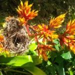 Papillote Gardens