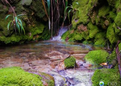 mossy-falls